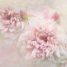 Sanfte Rosen von Teresa Pople