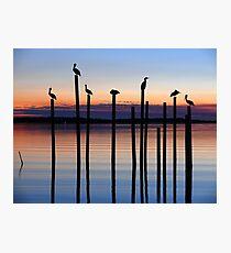 Seven Birds at Dusk Photographic Print