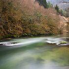 Albarine river by Patrick Morand