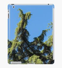 Lacy Cypress Branches and a Parrots Nest iPad Case/Skin