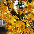 autumn leaves, show low, az by rmenaker