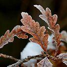 Snow & Oak by AnnDixon