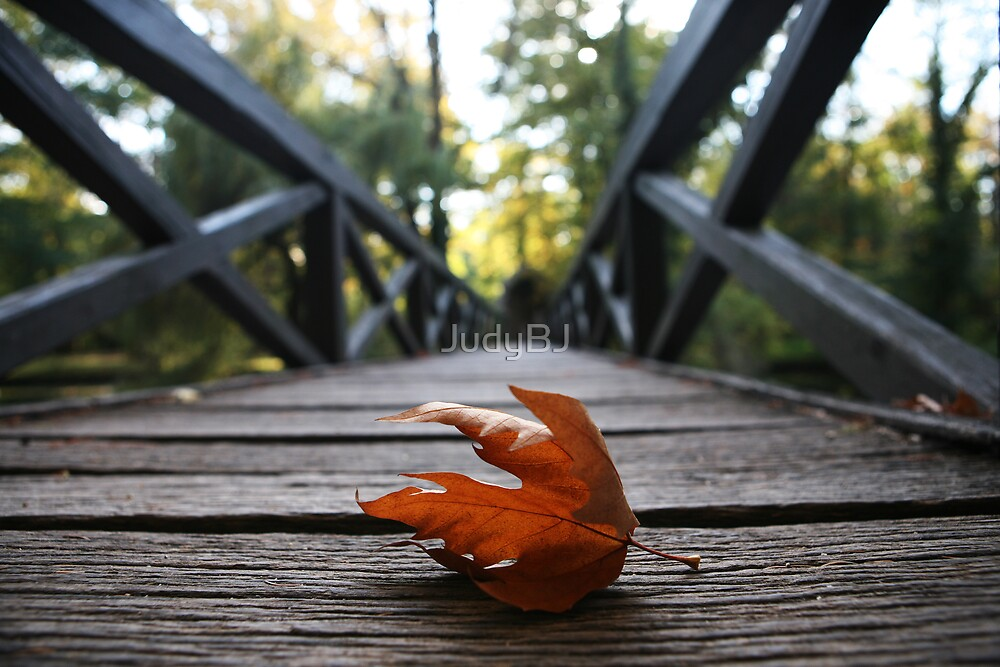 Fall leaf  by JudyBJ