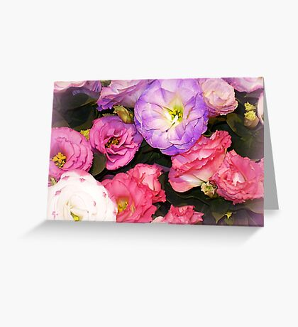Lisianthus as beautiful  as any Flower Greeting Card