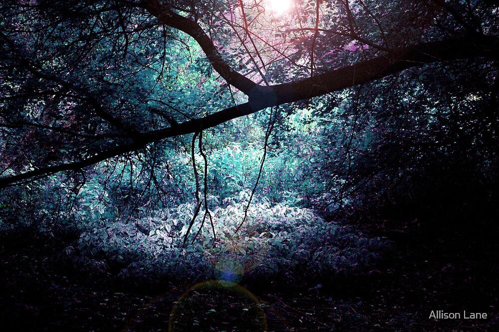 The Light by Allison Lane
