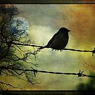 Vogel auf einem Draht von MarieG