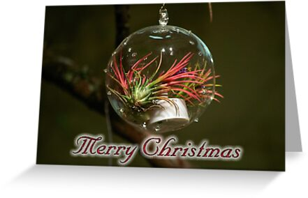 Airplant Christmas Ornament by TJ Baccari Photography