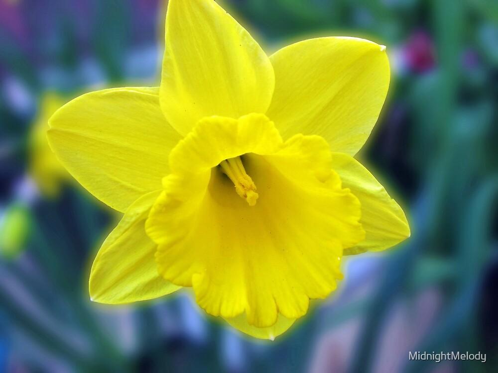 Vibrant Golden Daffodil by MidnightMelody