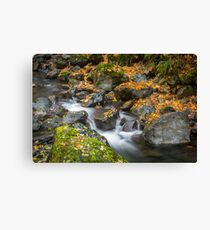 Fall in Olympic NP Canvas Print