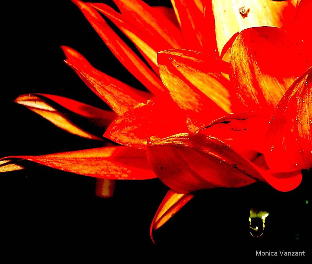 Dahlia's Teardrop by Monica Vanzant