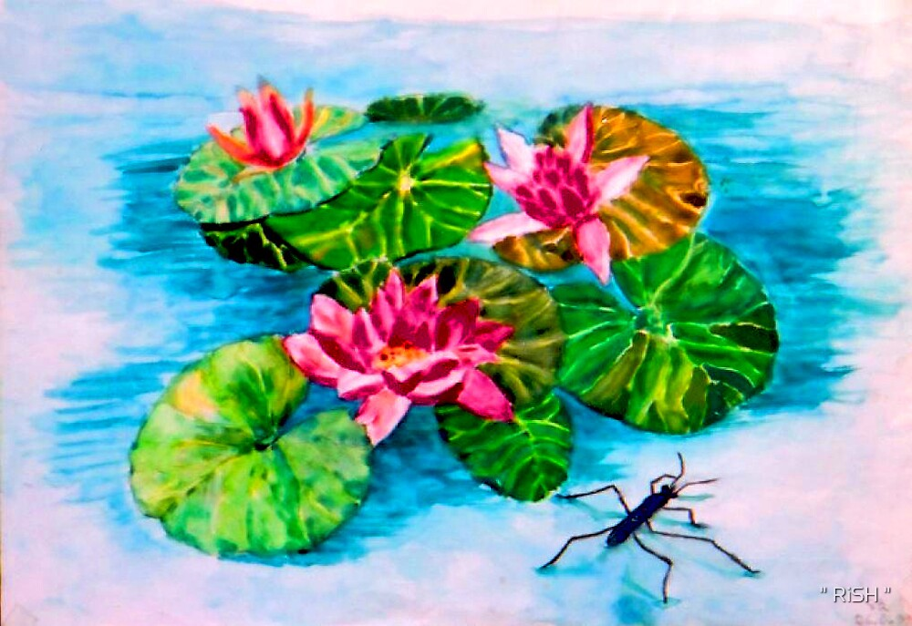 "Water lilly and the water bug by "" RiSH """