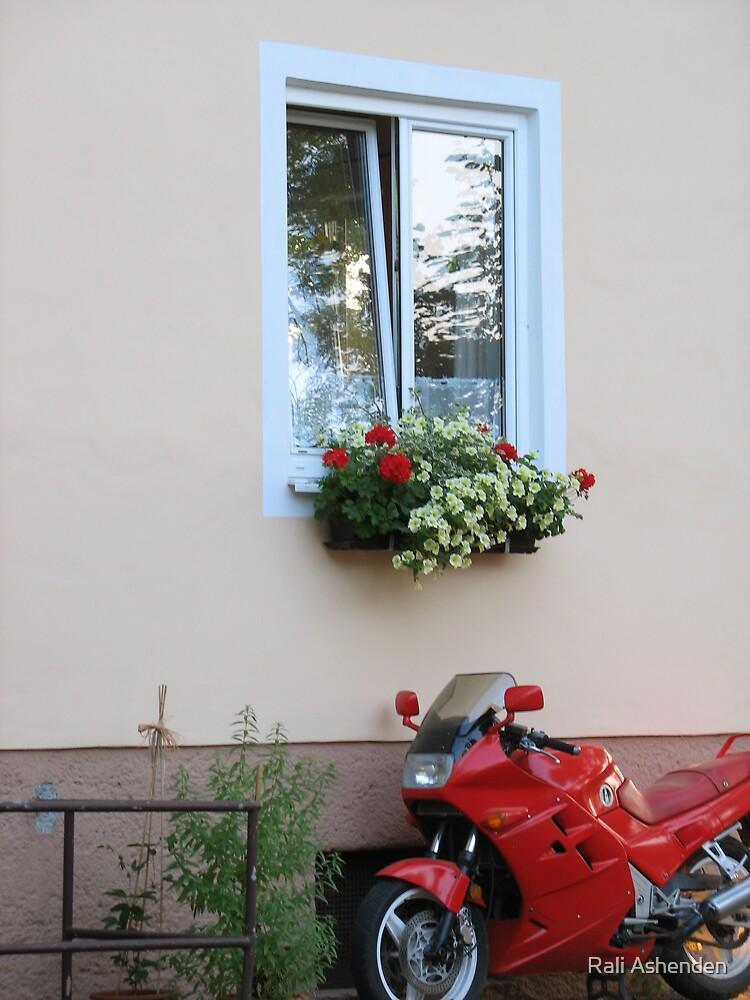 Red Rider by Rali Ashenden
