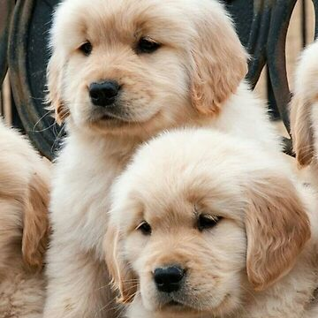 Cute Puppies by Vitalia