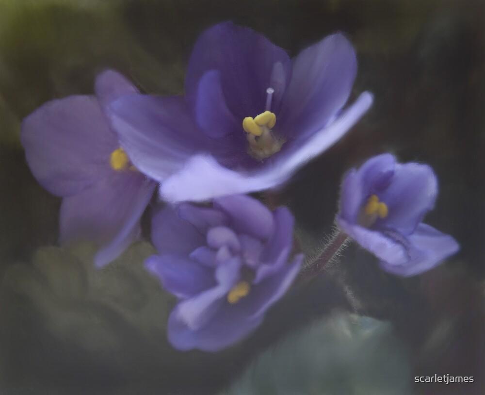 My Violet by scarletjames