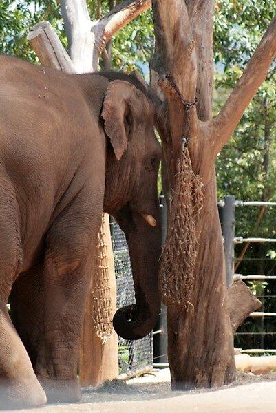 Taronga Zoo - Sydney by Ricardo Santos