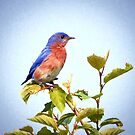 Bluebird on Top by Kerri Farley