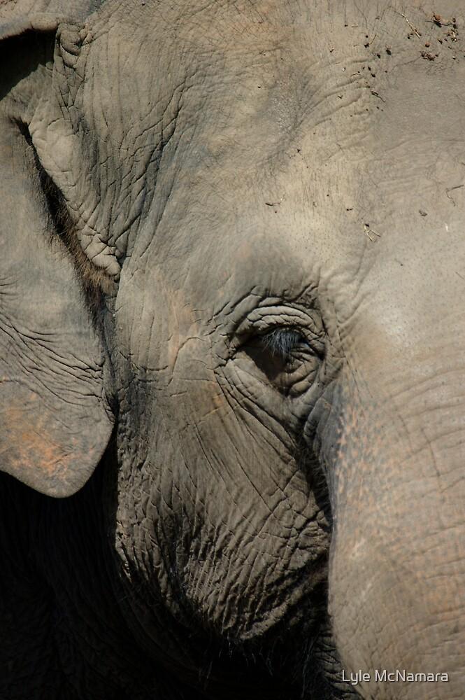 Elephant Portrait by Lyle McNamara