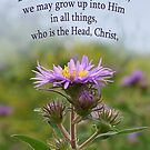 Holding to Truth in Love, Grow Up into Him ~ Eph 4:15 by Robin Clifton