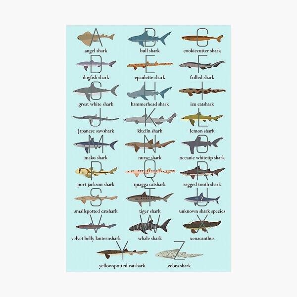 Shark Alphabet Photographic Print