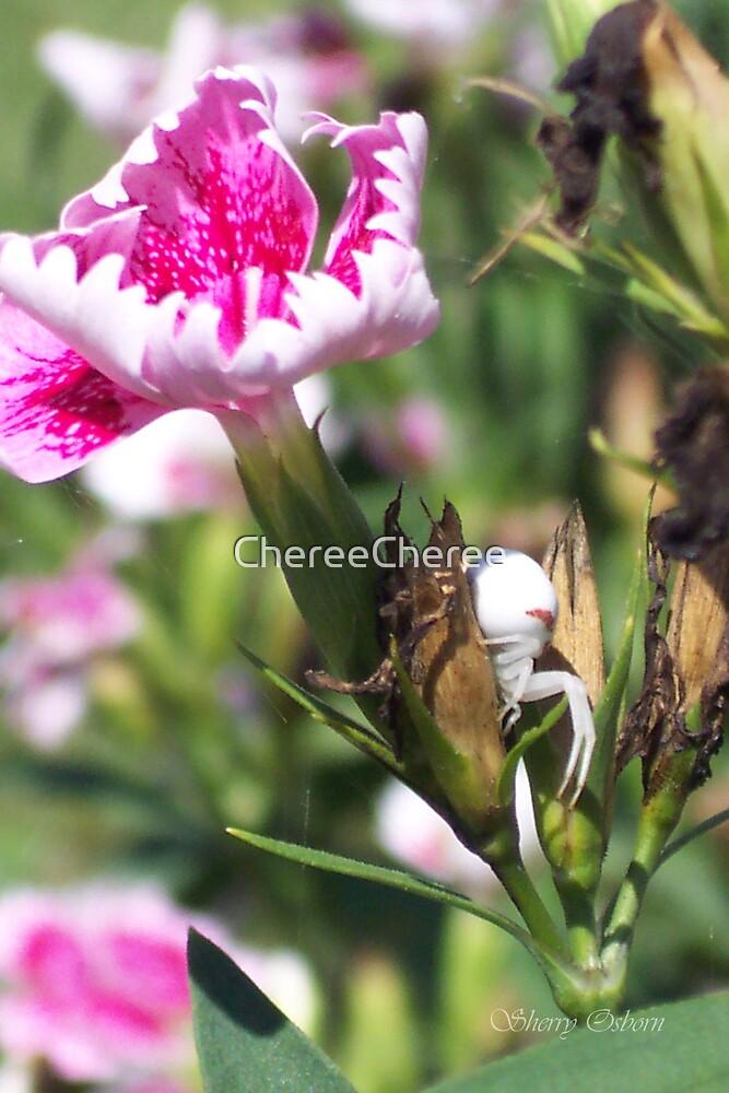 Crab Spider 2 by ChereeCheree