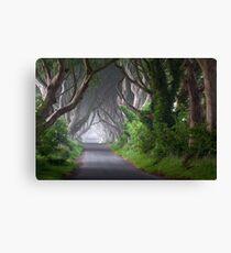 The Dark Hedges / Game of Thrones / Co Antrim / Northern Ireland Canvas Print