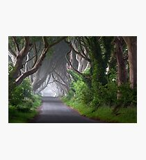 The Dark Hedges / Game of Thrones / Co Antrim / Northern Ireland Photographic Print