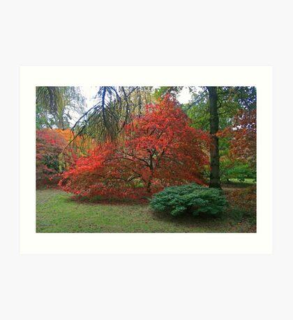 Autumn Colours 2014 Art Print