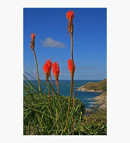North Devon Coast Photographic Print