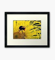 Flower Bee Framed Print