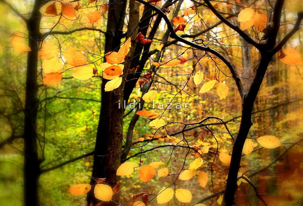 Autumn dream by i l d i    l a z a r