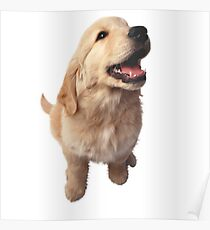 Puppy Retriever Poster