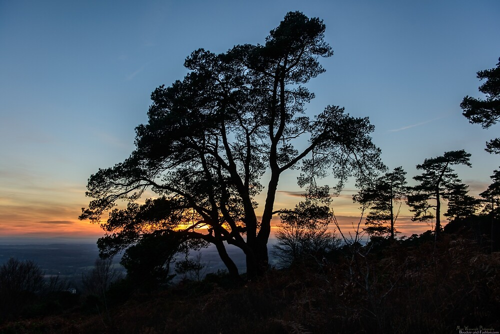 Sunlight Fading Over The Surrey Hills  by MarcW