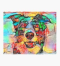 Collie Border Photographic Print