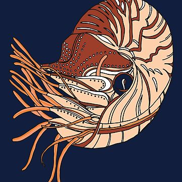 Nautilus Drawing by miskis22