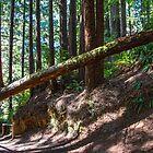 USA. California. Trees of Mystery. Candelabra Tree. by vadim19