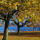 Palmer Park in Fall 8 by marybedy