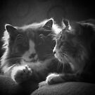 Toonces and Winston Black and White by Magnum1975