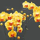 Yellow-red  orchids by Arie Koene