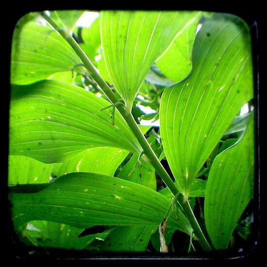 Green - TTV by Kitsmumma