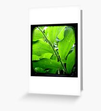 Green - TTV Greeting Card