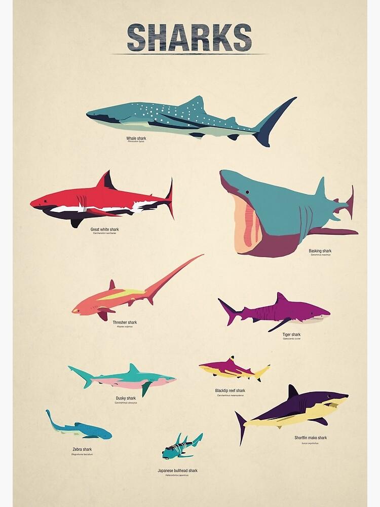 Sharks by greatskybear