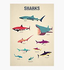 Sharks Photographic Print