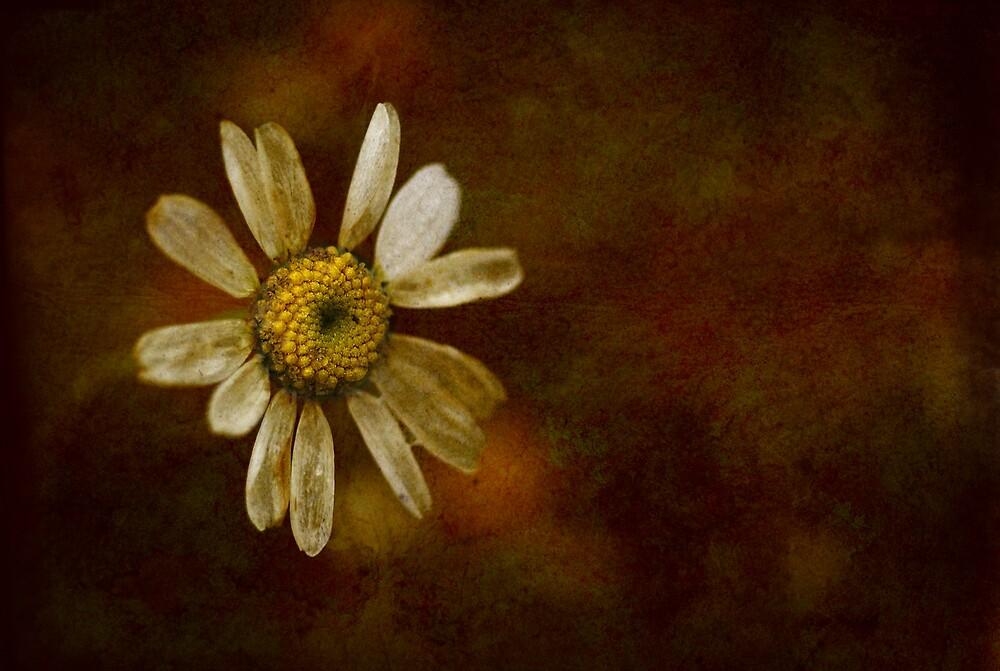 the last daisy by Backbeat