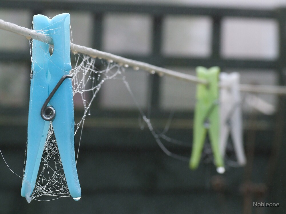 Cobwebs on Pegs by Nobleone