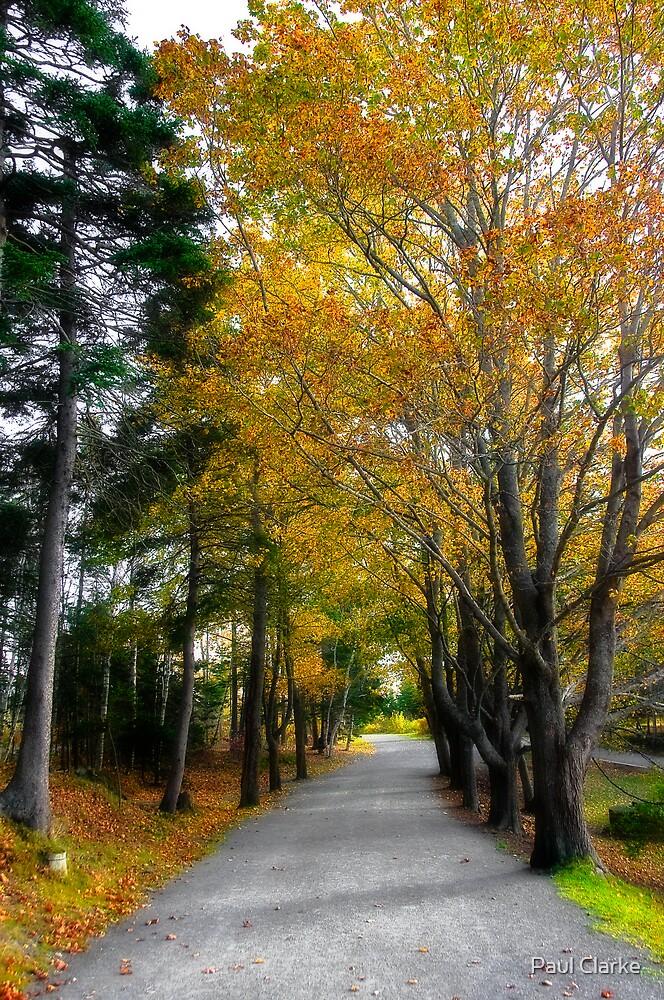 Fall in Point Pleasant Park by Paul Clarke