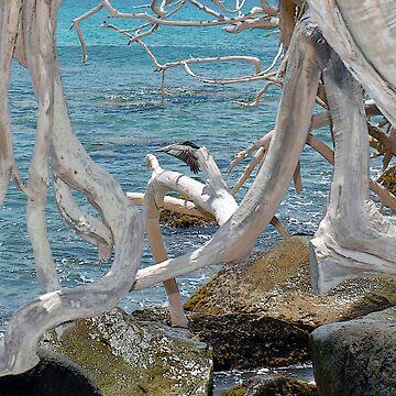 Aruba Captured by vmgh