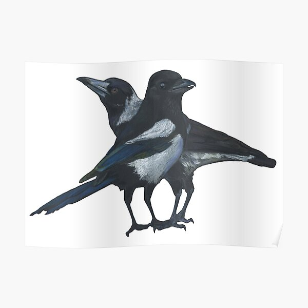 Magpie squared Poster