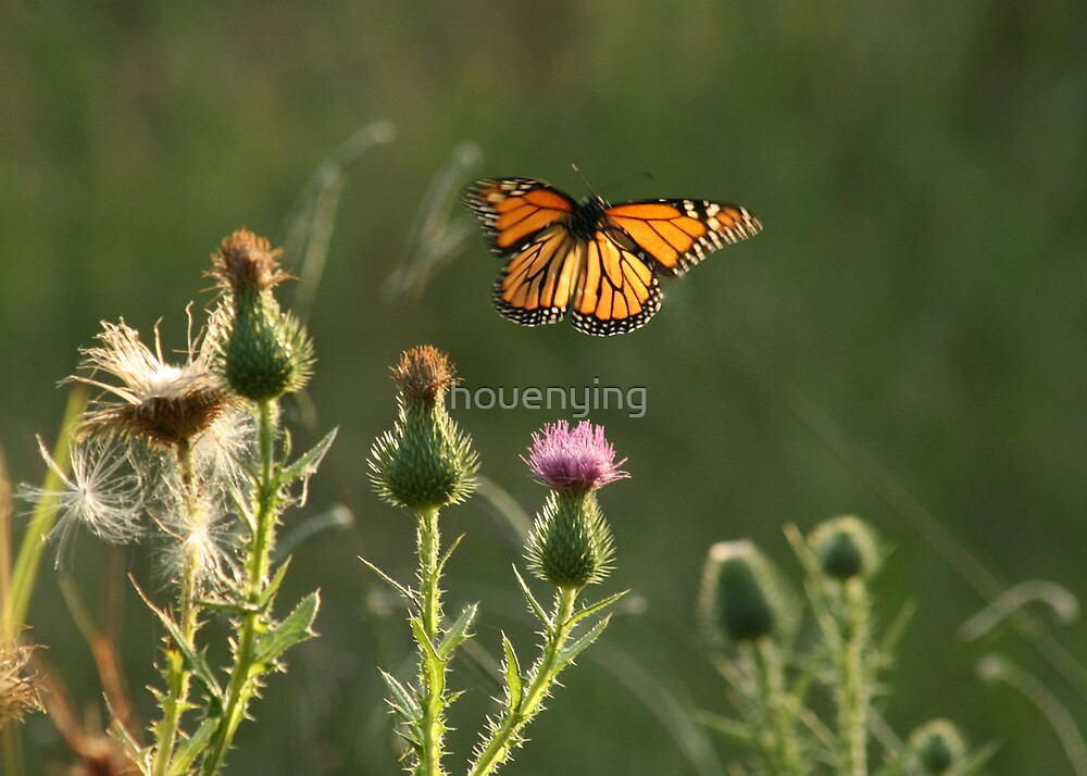 showing by houenying
