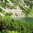 Green paradise by Kasia  Kotlarska