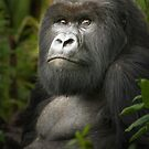 Gorilla V by Neville Jones